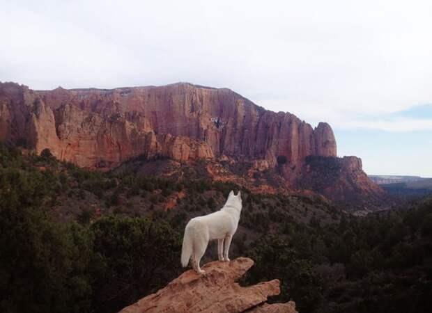 путешествие по США Джона Шторца и его собаки Вольфа (18)