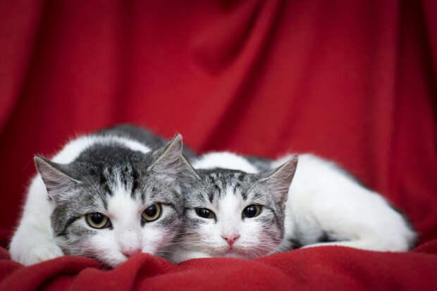 Пятничные котики Кай и Герда – грустное детство, надежда на тебя