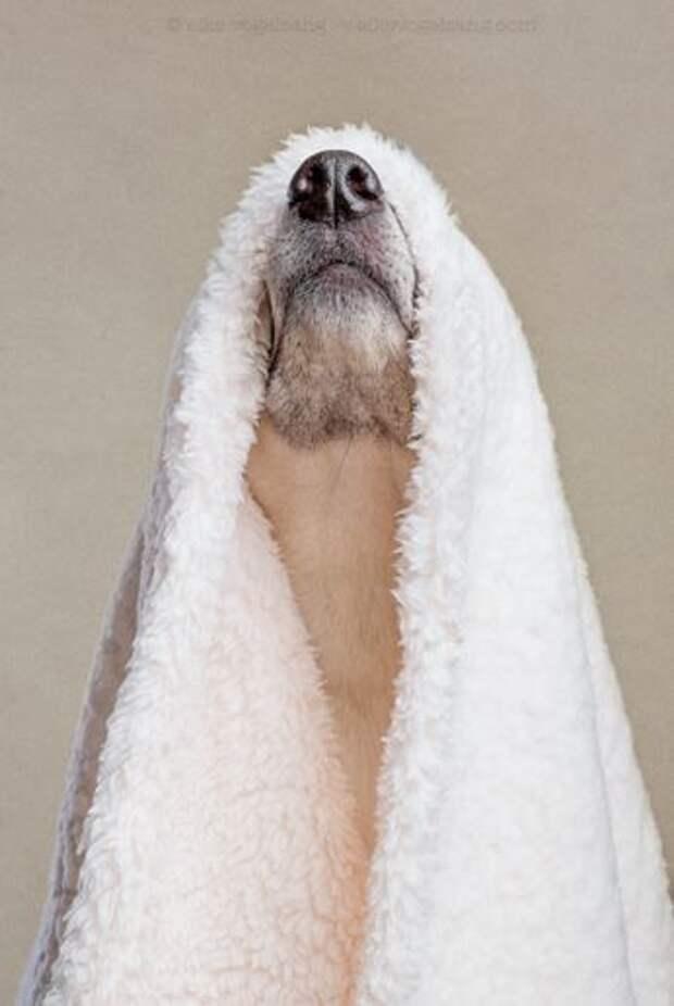 Фотогеничность собак в серии забавных снимков
