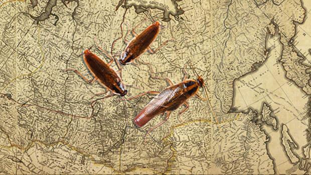 Мерзкие, но полезные. Как тараканы уточнили датировку ледникового периода