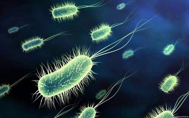 Удивительные факты о местах обитания коварных вирусов и бактерий
