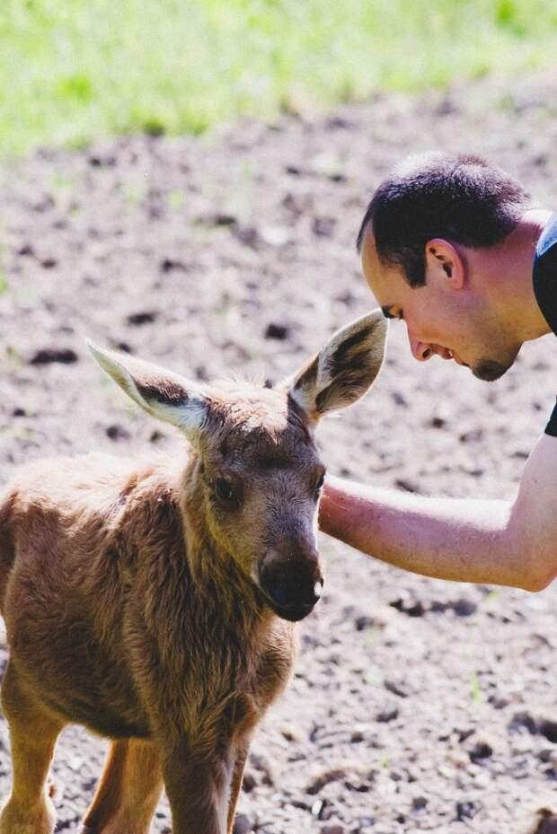 13 животных, которые не забыли поблагодарить людей, которые им помогли
