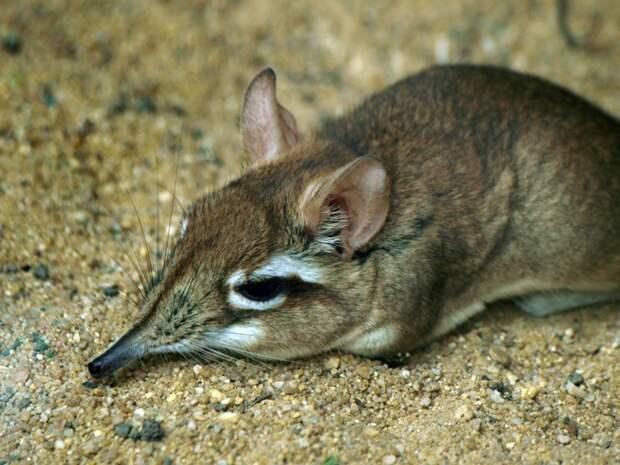 10 гениальных охотников царства животных животные, факты