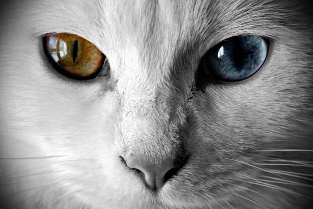 Посмотрите в эти глаза! . Фантастическое совпадение! / . Фотографии / Ика-Румба