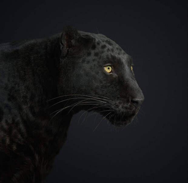 Блестящие портретные фотографии животных