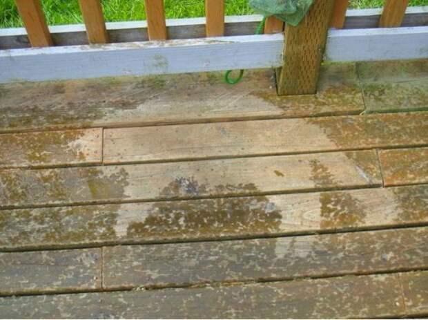 Терпел дождь до последнего животные, коты, фото