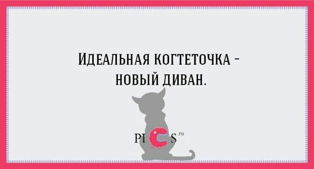 20 открыток с истинными мыслями котов