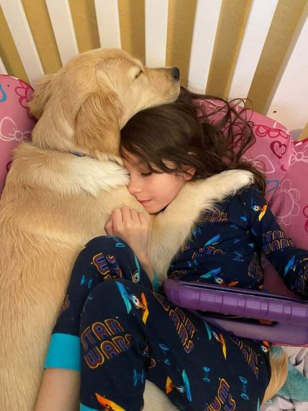 Вся глубина взаимоотношений человека и животных