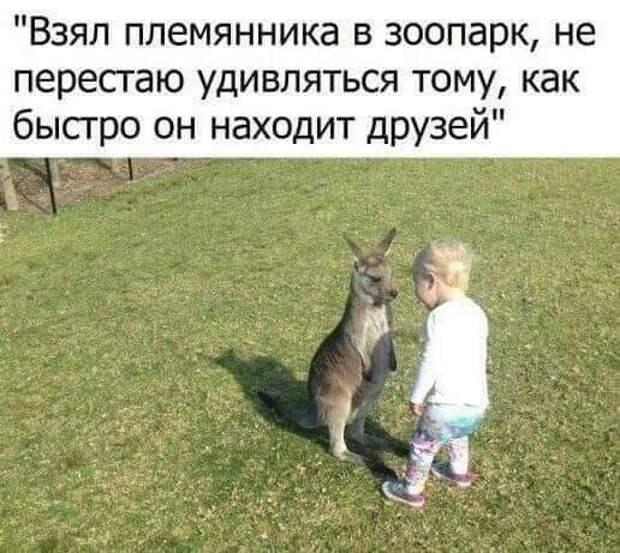 """Возможно, это изображение (стоит и текст «""""взял племянника в зоопарк, не перестаю удивляться тому, как быстро он находит друзей""""»)"""