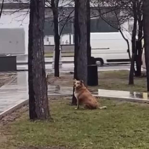 У станции метро «Динамо» нашли раненую собаку в положении