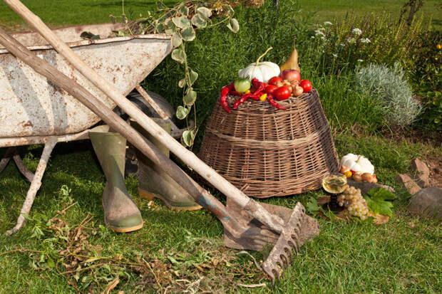 Что рядом с чем сажать в огороде