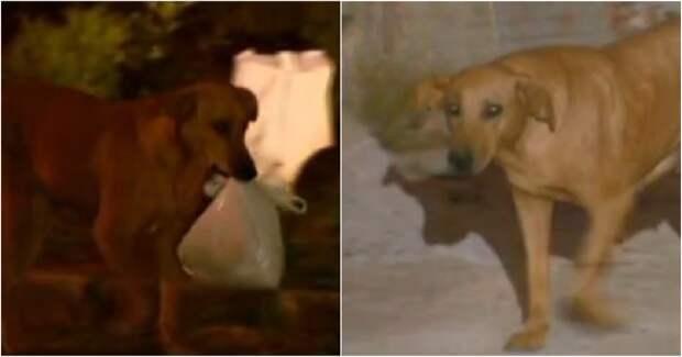 Загадочное исчезновение собаки по вечерам удивляло хозяйку. Она проследила за ней – и открытый секрет растрогал её до глубины души!