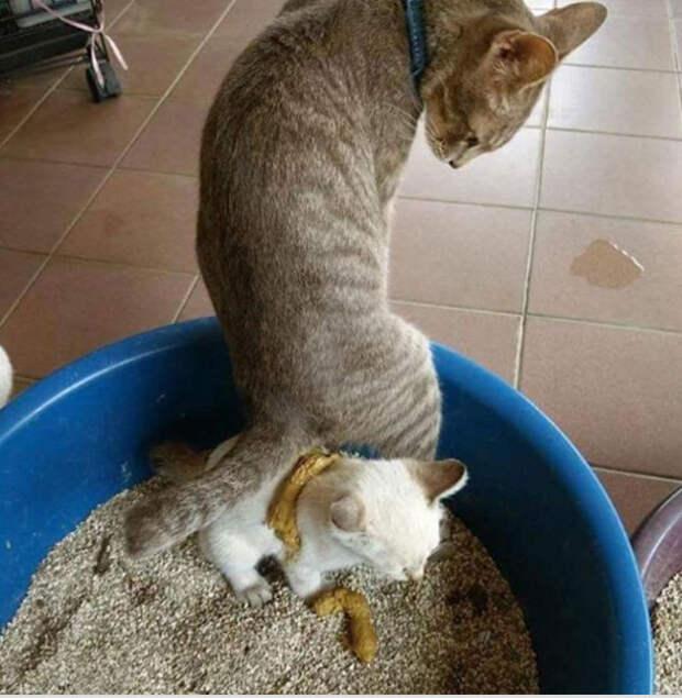 21 факт о работе сотрудников приютов для животных