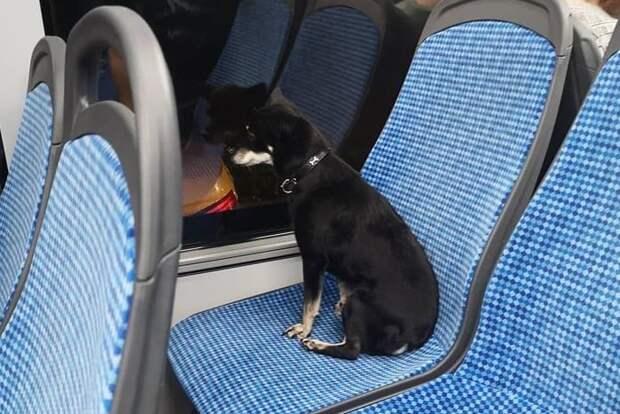 Тихий домашний пес Чип неожиданно для хозяев стал путешественником