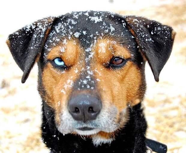 Ультрамарин - собаки