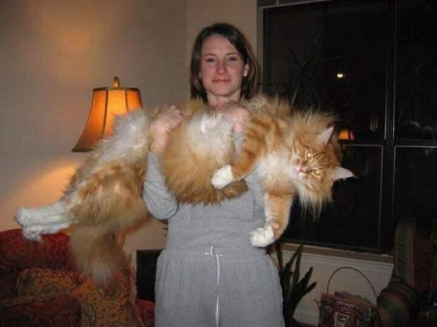 Большие коты