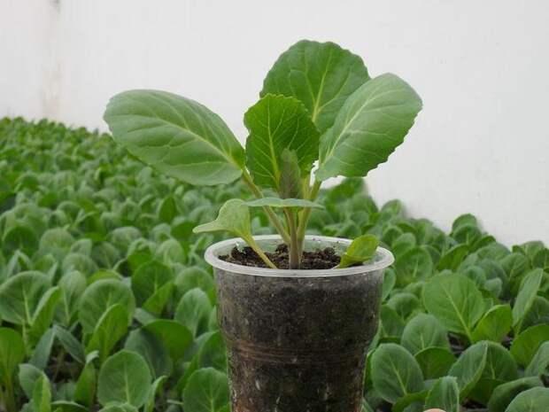 Февраль. Пора сажать рассаду перца, помидоров и других овощных культур!