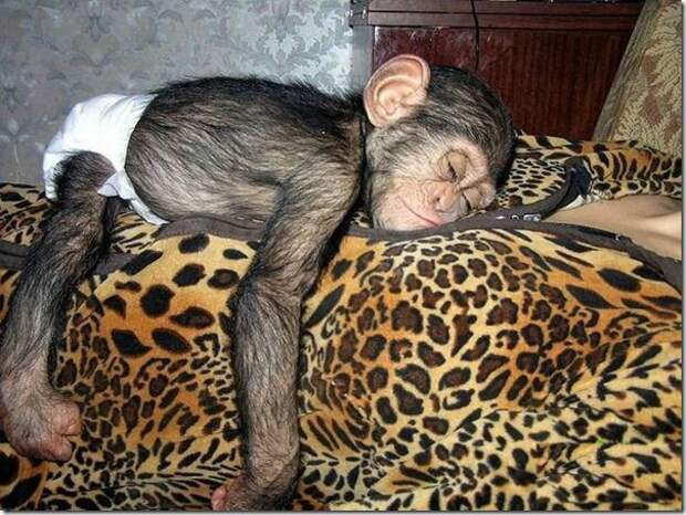 in-marmoset-a-new-mom_4_(www.funnypagenet.com)