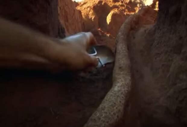 Учёные раскопали колоссальный подземный город муравьёв - видео-09