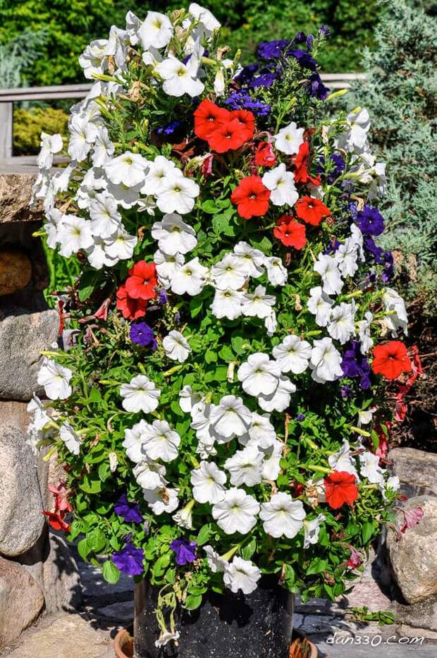 Идеи цветочных башен для сада