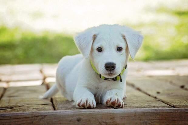 Собака. Фото: pixabay.com