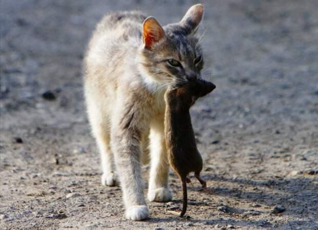 Пушистое сокровище: откуда на Руси взялись кошки и почему их так полюбили