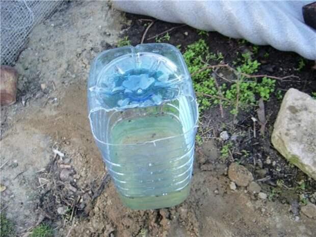 Капельный полив из пластиковых бутылок.