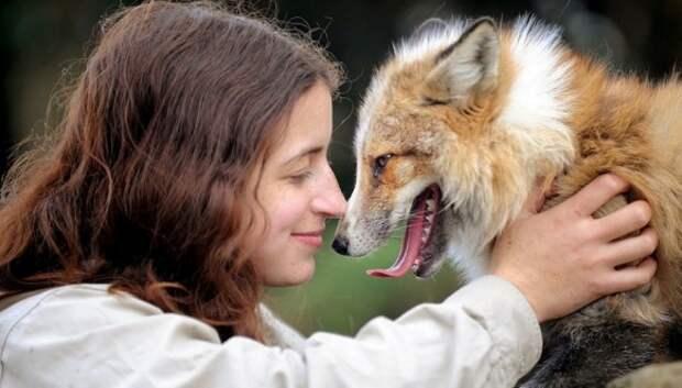 Знакомьтесь с лисой, которая думает, что она собака