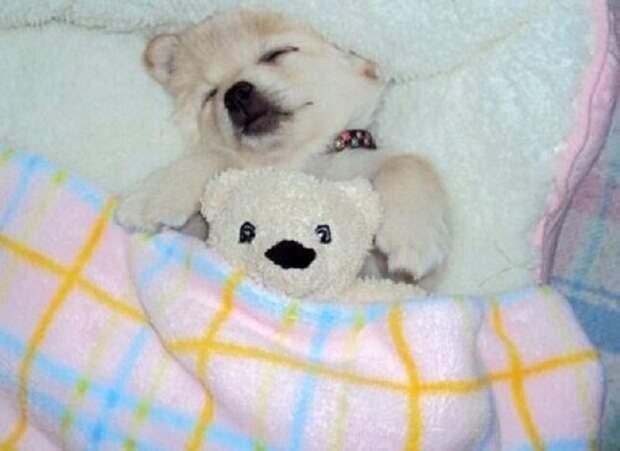 Собачка спит с мишкой
