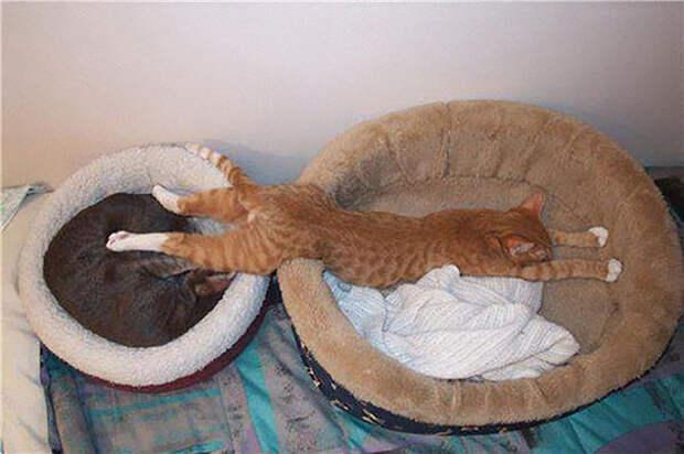 Как хочу, так и сплю - не мешайте!