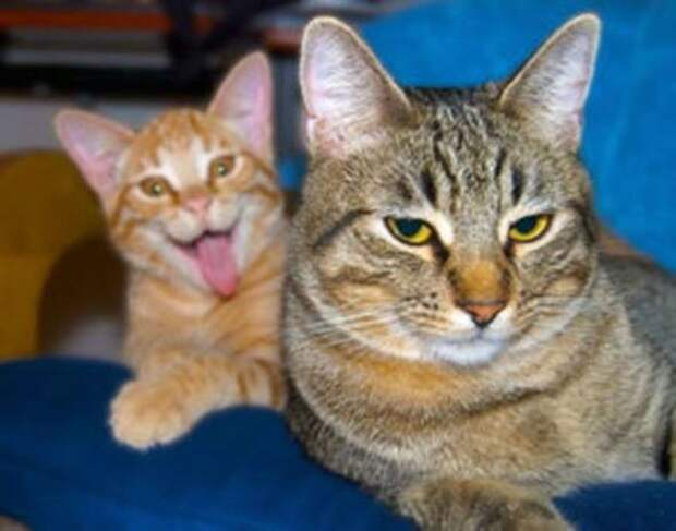 20 котов, которые испортили фотографии! Но смешно же?