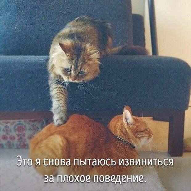Животные, которые ведут себя совсем как я