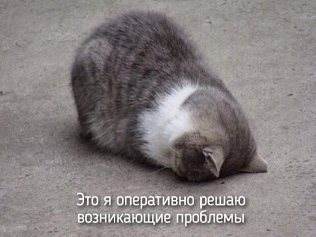 это я как котик