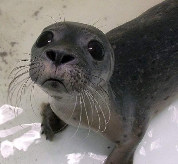 18 детенышей диких животных, которых редко можно увидеть вживую