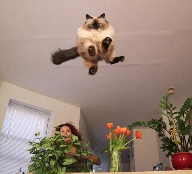 Эпичная подборка мимимишных фото кошек всех времён и народов! Улыбнемся?