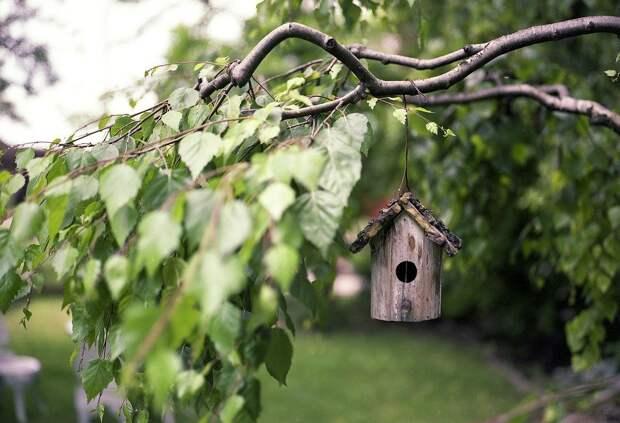 В парке «Дубки » жители могут вешать кормушки для птиц