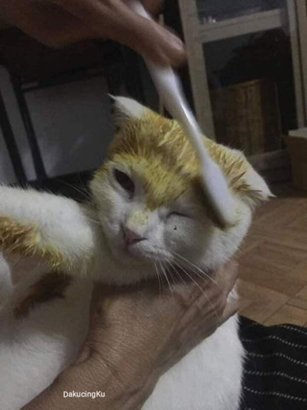 Покраска кота.