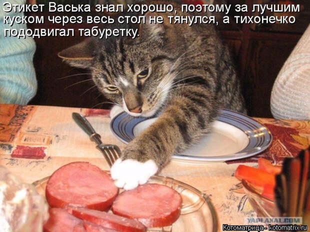 kotomatritsa_Tf (700x524, 438Kb)