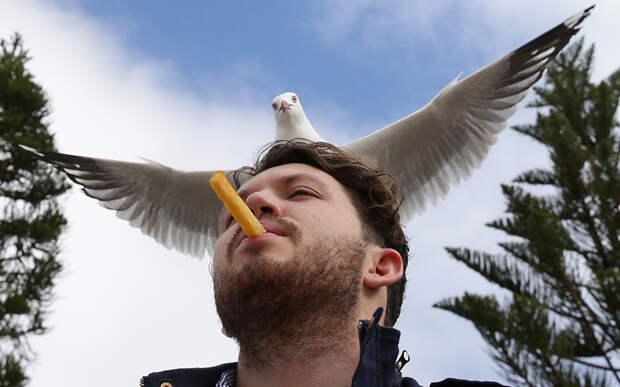 Накорми чайку