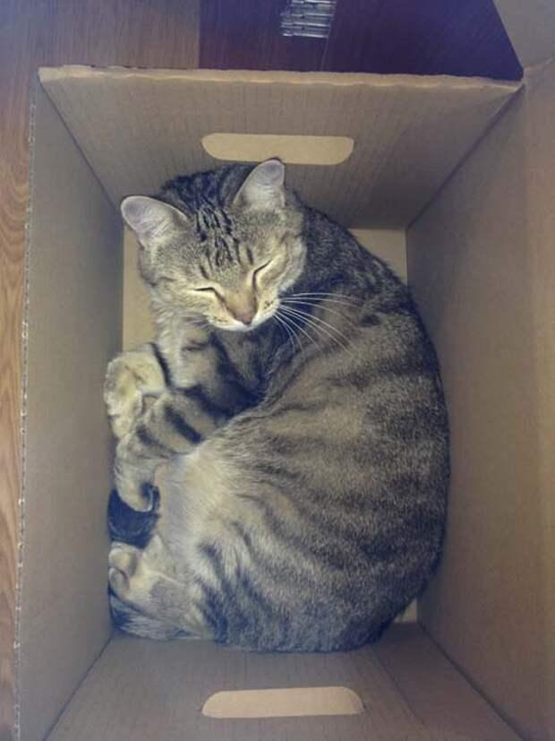 IMG 4092 Как сделать дом для кота