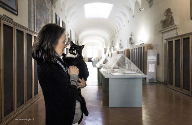 Фотографии кошек, которые живут в местах, где работают люди 7