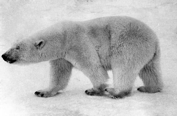 Петр Вавилов: 34 дня с винтовкой наедине с белыми медведями