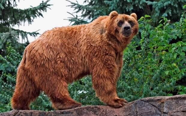 http://www.bearworld.ru/wp-content/uploads/bearworld/2014/10/%D0%9A%D0%B0%D0%B4%D1%8C%D1%8F%D0%BA2.jpg