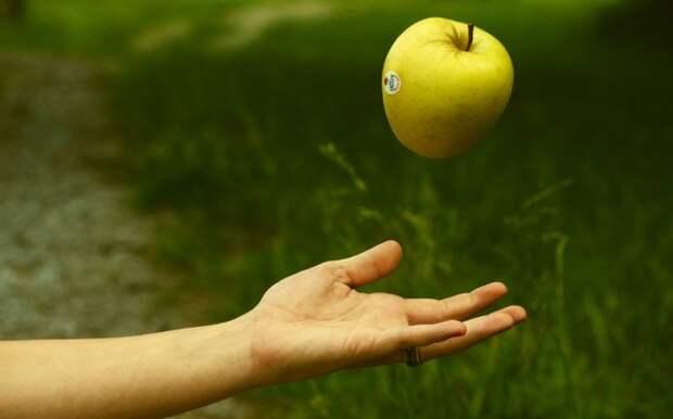 Падающее в руки яблоко