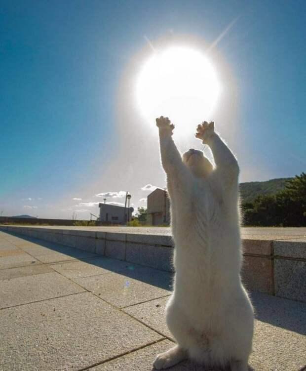 Кот тянется к солнцу