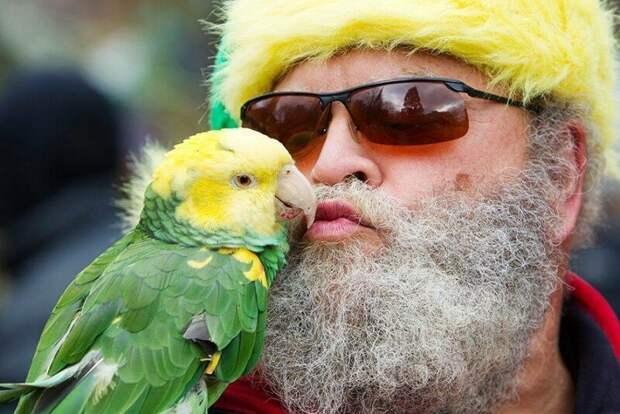 Пестрый мир попугаев животные, попугай, птицы