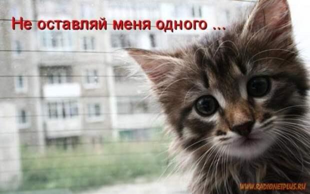 Зверье мое......
