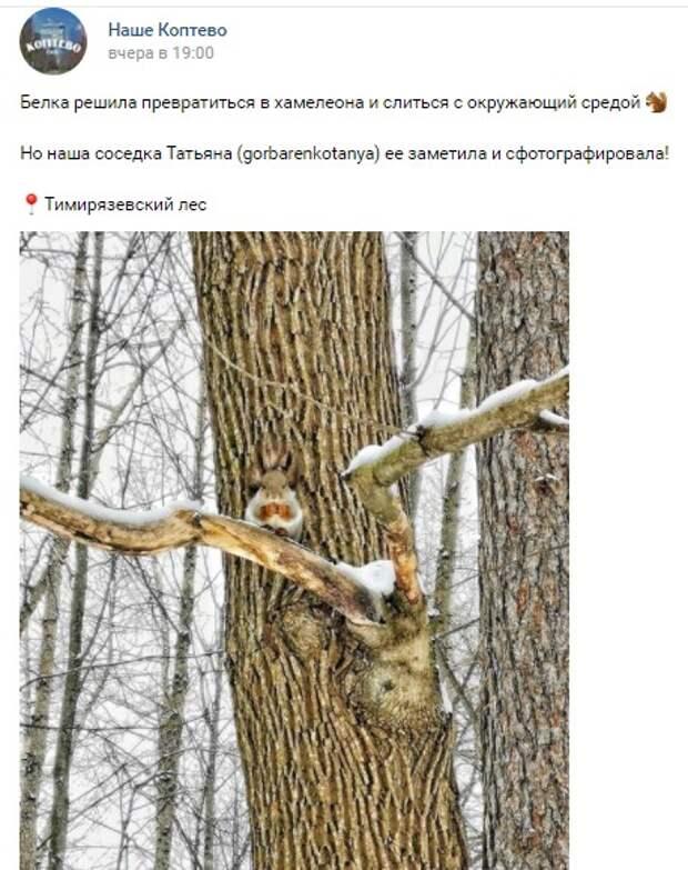 Фото-загадка: где белка в Тимирязевском парке