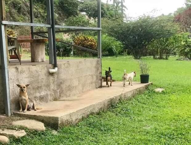 Собаки на улице