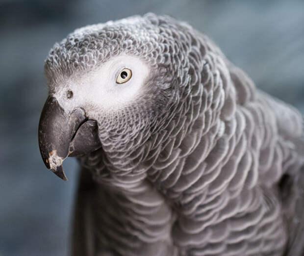 Попугаи животные, факты